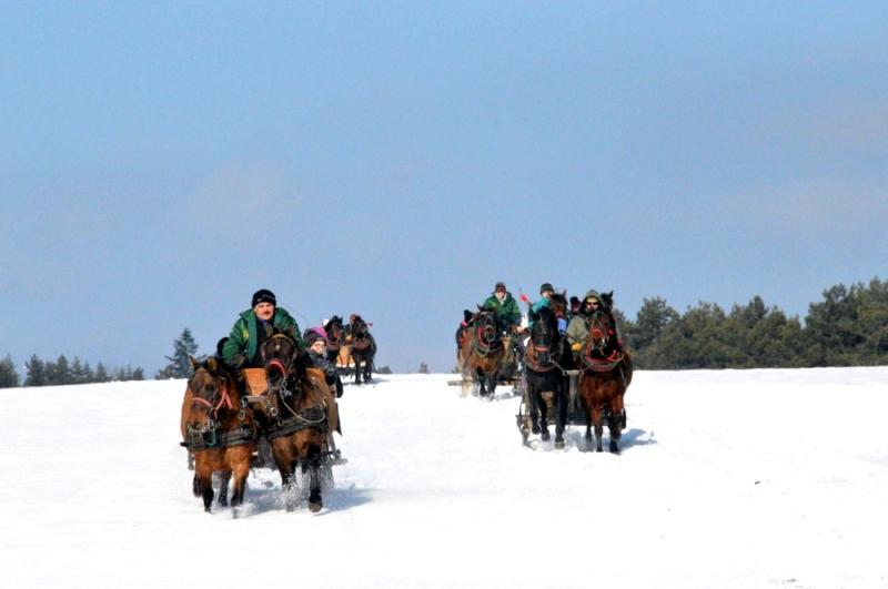 regietów stadnina koni huculskich (11)
