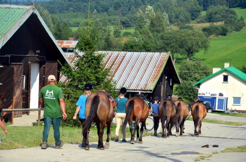 regietów stadnina koni huculskich (9)