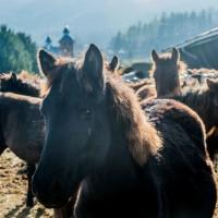 stadnina koni huculskich (19)