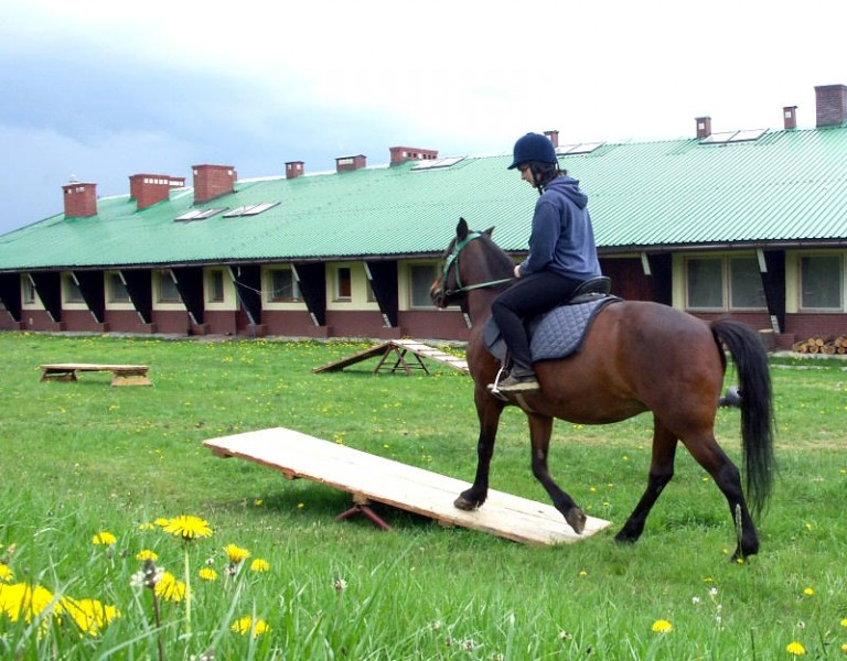 hodowla koni huculskich (8)